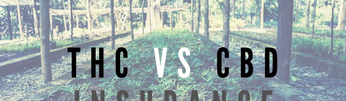 CBD vs THC Insurance